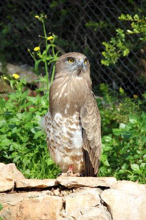 Haifa Educational Zoo : Haifa Zoo