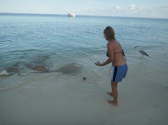 Vivanta by Taj Coral Reef Maldives: razze 1