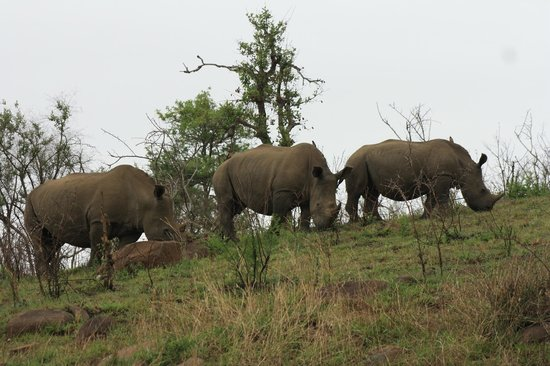 Heritage Day Tours & Safaris: Rhinos at hluhluwe