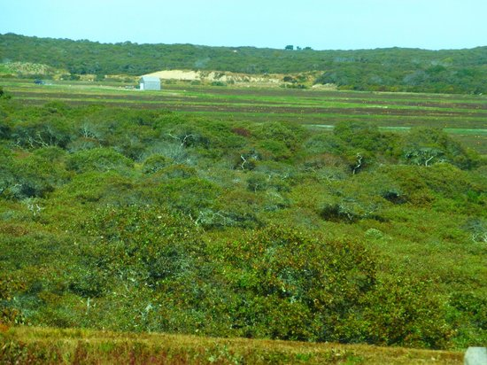 Gail's Tours of Nantucket: the view of the bog from the road, using a zoom lens
