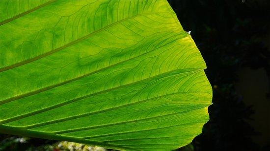 Hotel Canarios : Plantas tropicales