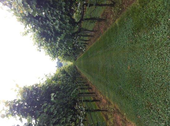 Horton Vineyards: Vineyard
