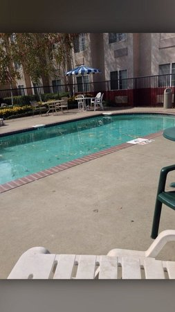 Surestay Plus Hotel By Best Western Rocklin: Pool with slimy water covered in dirt and leaves, along with filthy patio furniture.