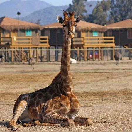 Rancagua, Chile: Las Cabañas del Parque