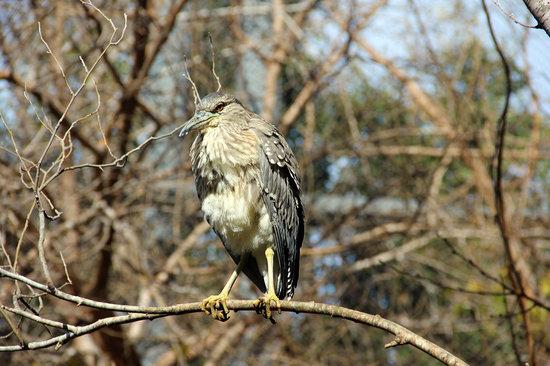 Haifa Educational Zoo : Birds in Haifa Zoo