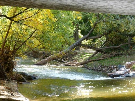 Boulder Creek Path: fallen tree in creek