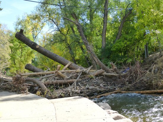 Boulder Creek Path: fallen trees along the creek