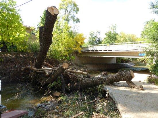 Boulder Creek Path: Creek path - fallen tree