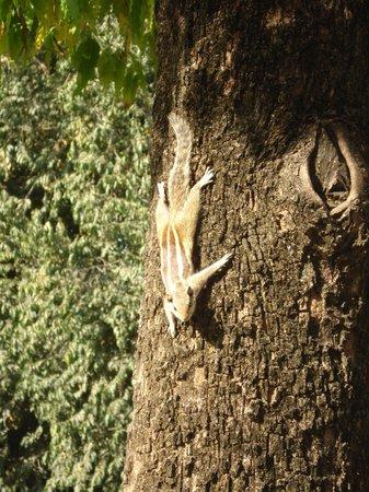 Vivanta by Taj - Sawai Madhopur Lodge: Outdoor