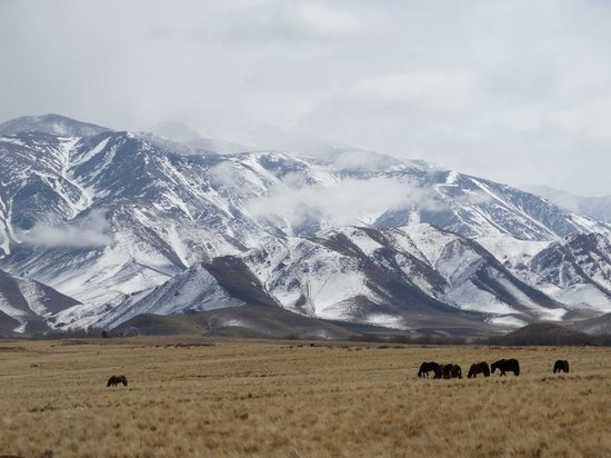 Estancia La Alejandra: The Andes and Wild Horses
