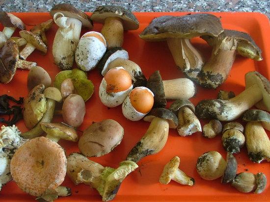 Podere Pratella: Funghi