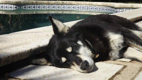 Mas Martis : mascota y piscina
