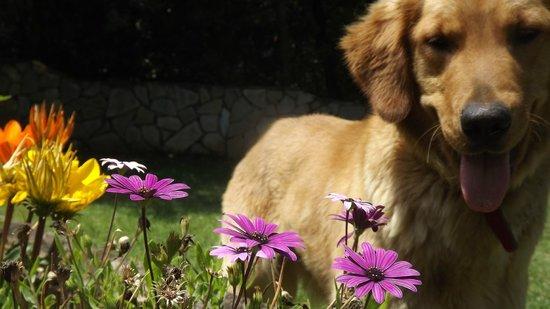 Mas Martis : mascota y flores