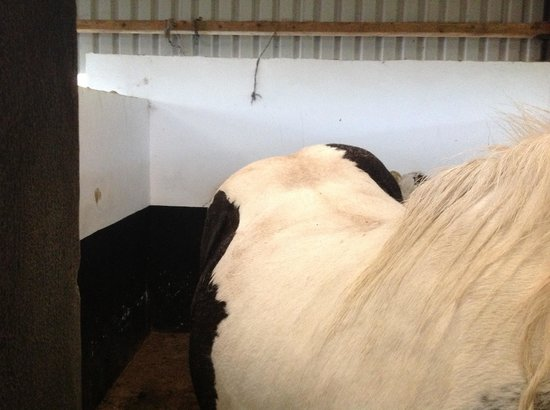 Muckross Riding Stables B&B: horse with bad back