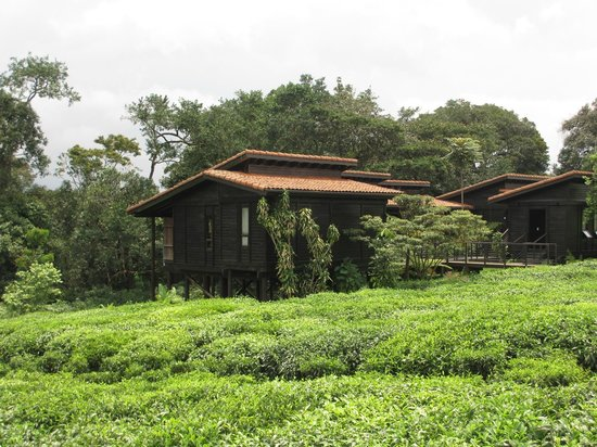 Nyungwe Forest Lodge: View of the hotel cabins