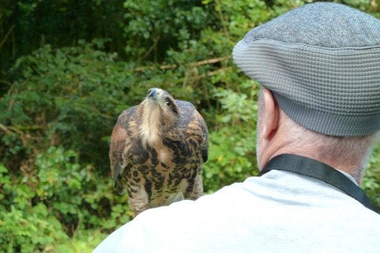 Ireland's School of Falconry : Falcon-ing at Ashford Castle