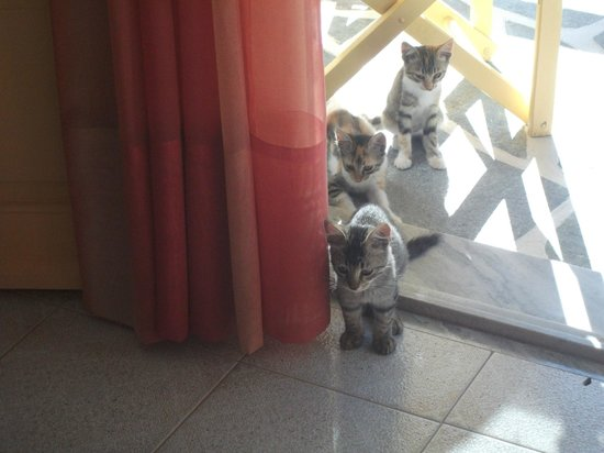 Betty Apartments : Dare we come in?