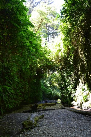 Jedediah Smith Campground: Fern Canyon