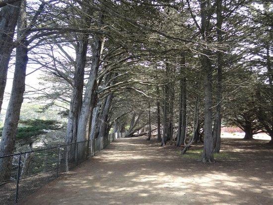 Ragged Point : Bosque beirando a costa onde é possível caminhar