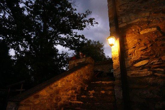 Antica Olivaia: At dusk