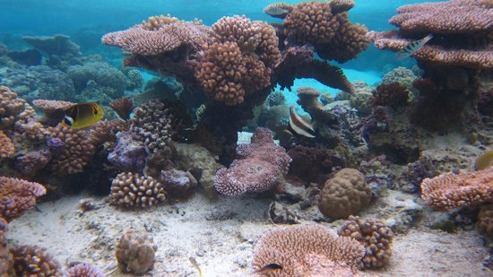 Pure Snorkeling by Reef Discovery: Coral Garden, Bora Bora