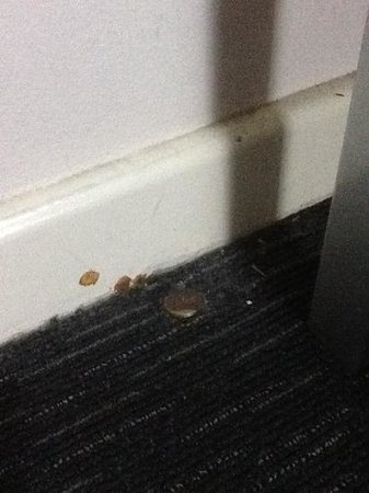 Mercure Darwin Airport Resort: cleanliness issue