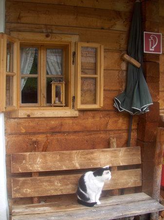 Das Almdorf - World Peace Eco Resort: Sogar die Katze stimmt