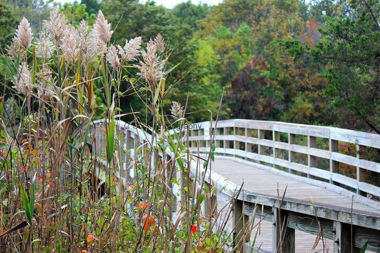 Sunken Meadow State Park : Along one of the walking paths nearest to the Long Island Sound.