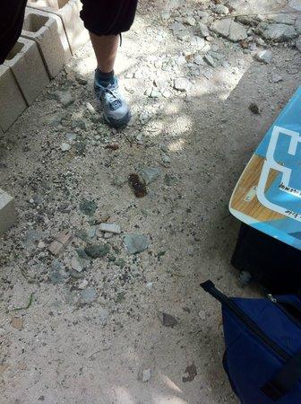 Cenote Encantado : DOG POP