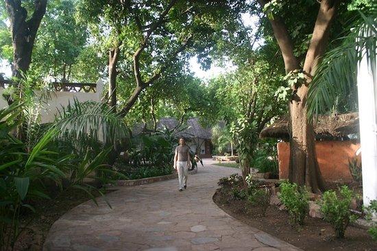 San Toro : The large garden