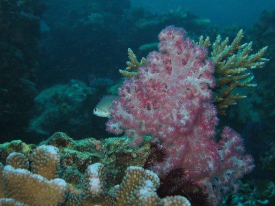 Garden Island Resort: The Reef