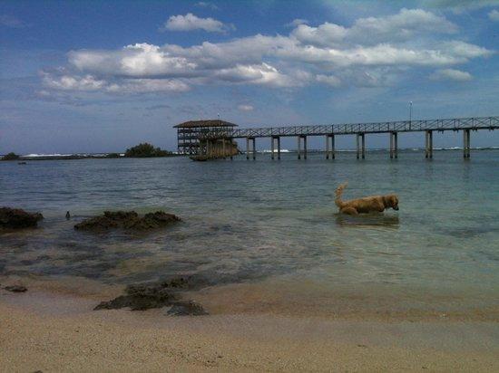 Sagana Resort: CLOUD9 BOARDWALK AND THE FAMILY DOG, OSCAR