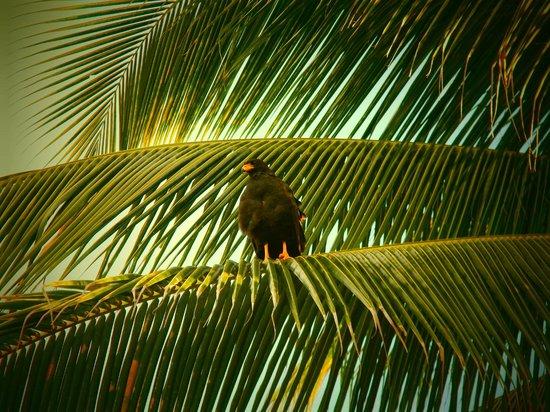Almaplena Eco Resort & Beach Club: en el camino encontramos una majestuosa aguila