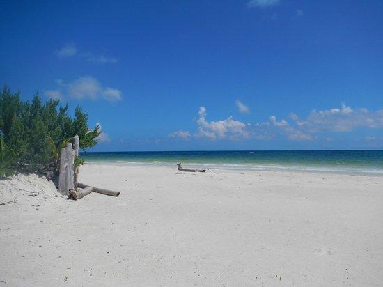 Almaplena Eco Resort & Beach Club: desde mi camastro