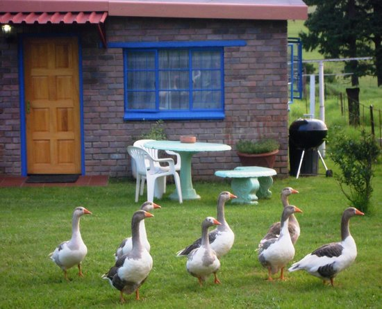 Petra's Country Guesthouse: Blue Cottage