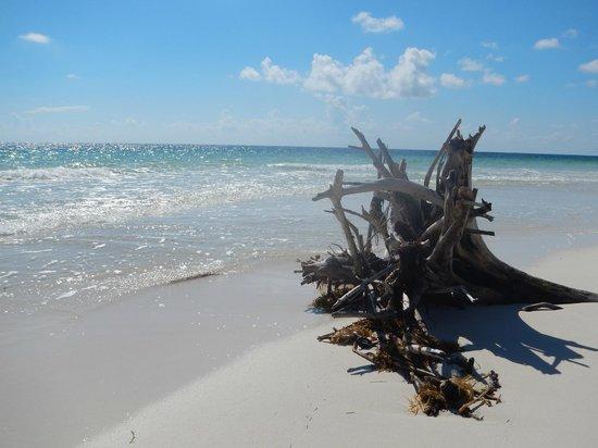 Almaplena Eco Resort & Beach Club: la playa