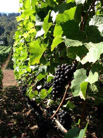 Cellar Door Wine Tours照片