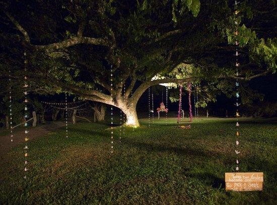Puakea Ranch : the 'kissing tree' at night