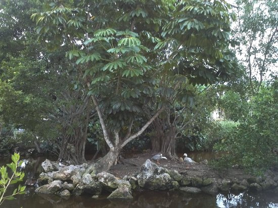 Periwinkle Park & Campground: pond