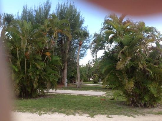Periwinkle Park & Campground: site