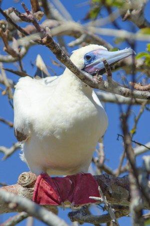 Scuba Galapagos: Nature