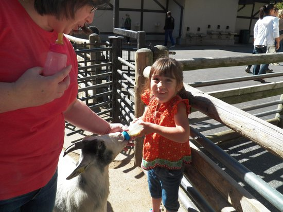 Grant's Farm: Happy girl feeding the baby goats.