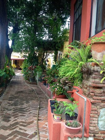 Casa Panchita : Garden path