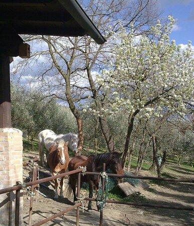 La Collina dei Ciliegi Agriturismo: Cavalli al ritorno