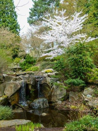 Bellevue Botanical Garden: A pleasant waterfall