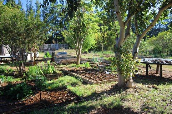 Orange Elephant Backpackers: Addo Backpackers - vegetable garden