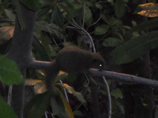 Koh Tao Star Villa : Squirrel