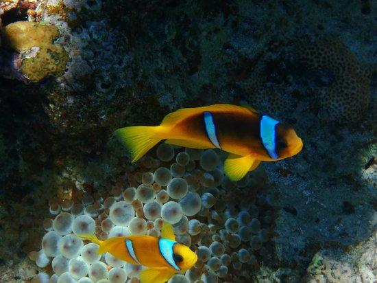 Domina Coral Bay Prestige Hotel : Nemo!