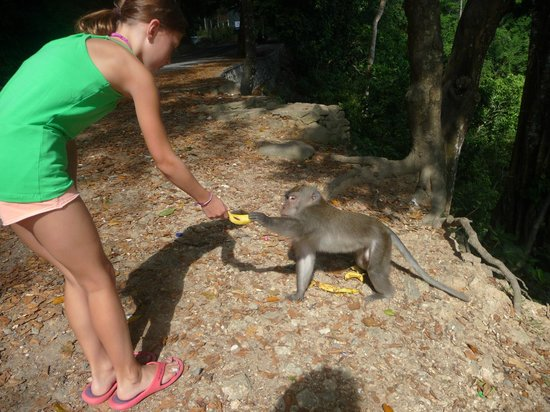 Adventure Lombok: monkey forest