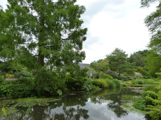 The Beth Chatto Gardens: regular tree